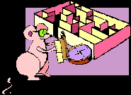 Image of mouse in front of a maze