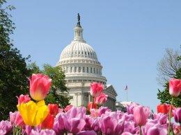 Capitol & tulips
