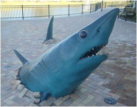 SharkWrites