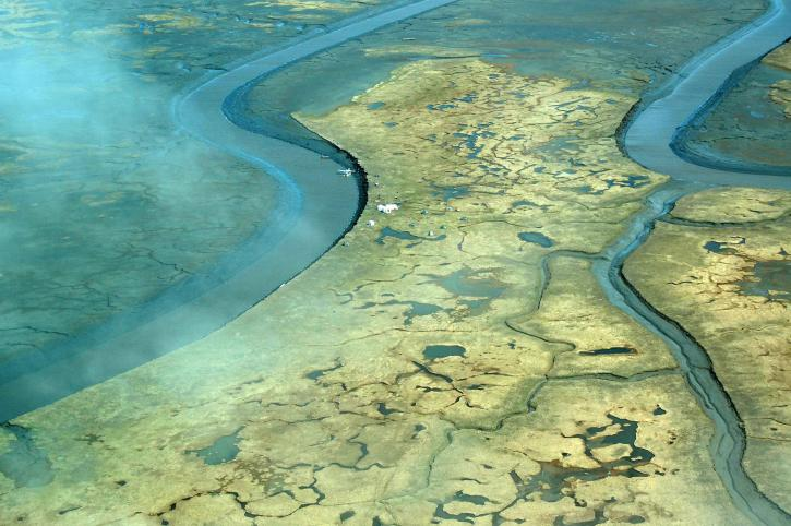 Swamp River Delta
