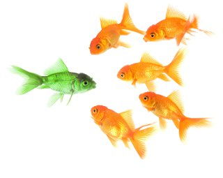Thought Leaders - 5 goldfish looking at one green fish