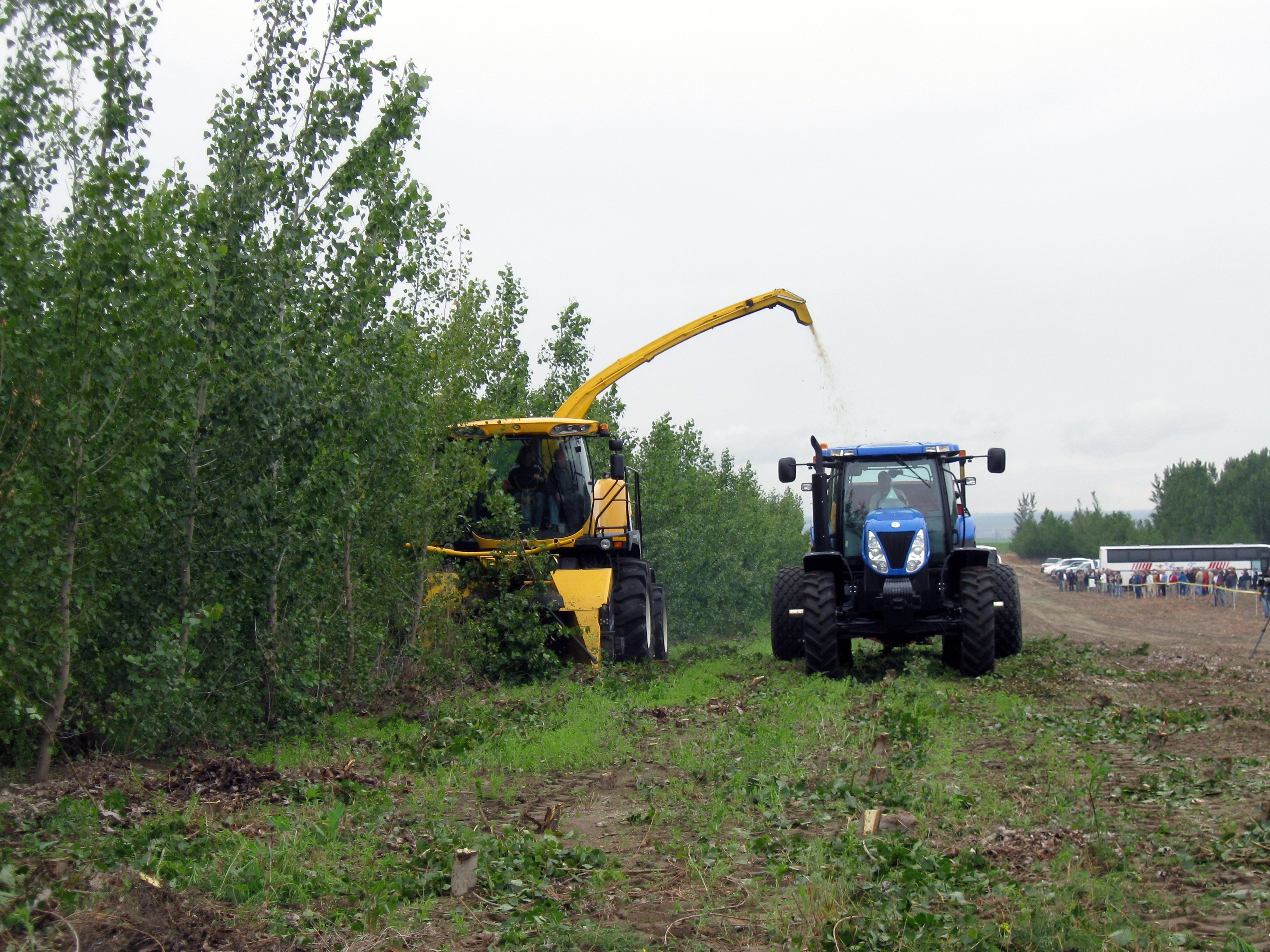 Poplar tree being harvested for cellulosic biofuel feedstock