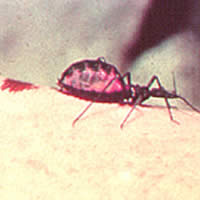 Neglected Tropical Diseases  - Image 1