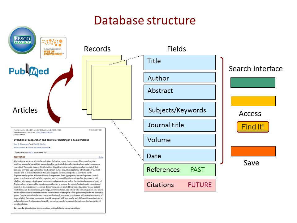 Database Structure, showing articles, records, fields, and interface options