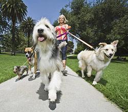 Woman walking her dogs.