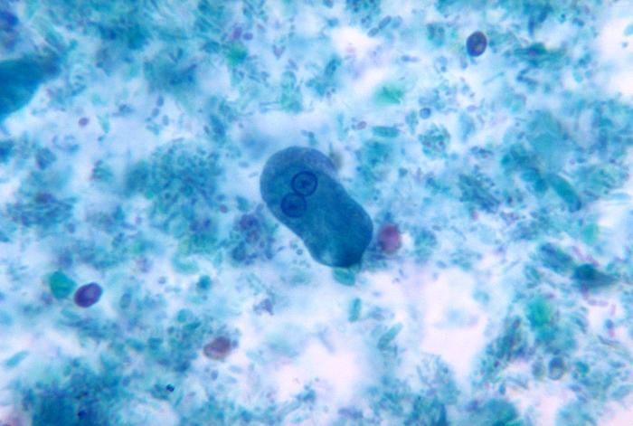 Entamoeba histolytica protozoan parasite magnified