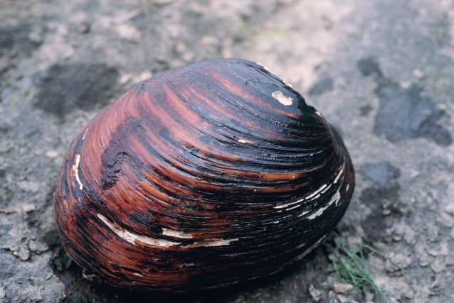 Mollusk, photo by Craig Stihler