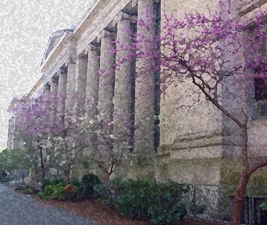 Langdell Purple Flowers