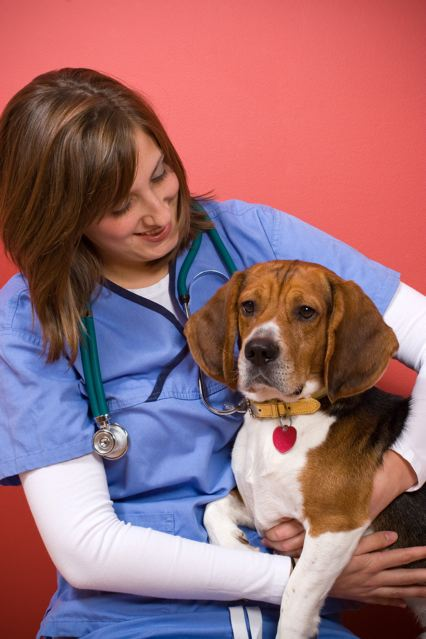 Veterinary assistant with a dog.