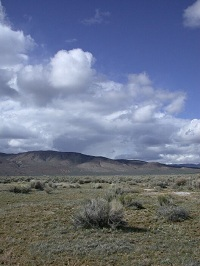 Nevada rangelands.
