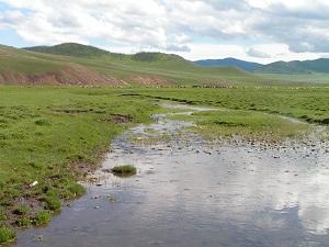 Green Nevada rangelands after a heavy rain.