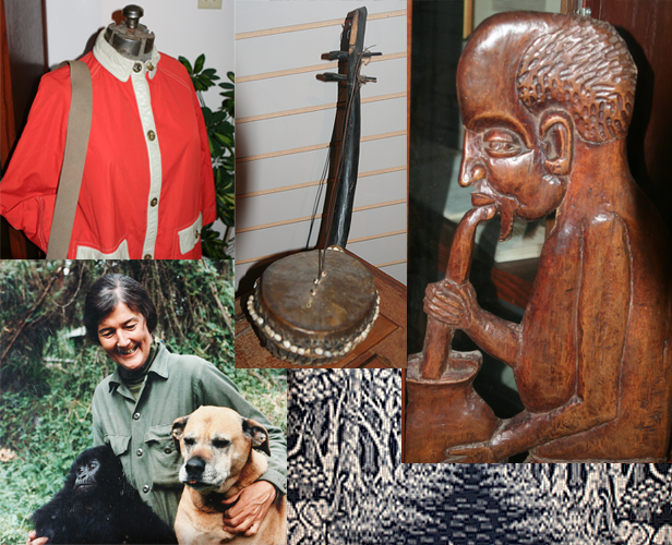 A random sampler of items on display in the Fossey Collection at Trustee Library.
