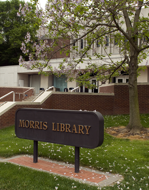 Morris Library in spring