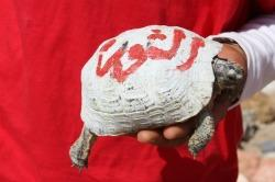 The word on the tortoise's shell is REVOLUTION in Arabic, written with the red and white colours of the Tunisian flag.