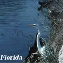 Bird in Florida