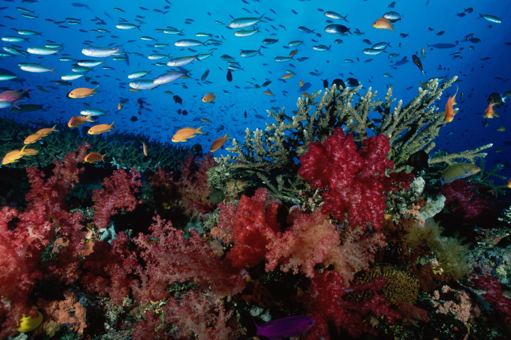 Reef and school of fish in the sea