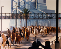 Horses Crossing the Main Street Bridge by Unknown