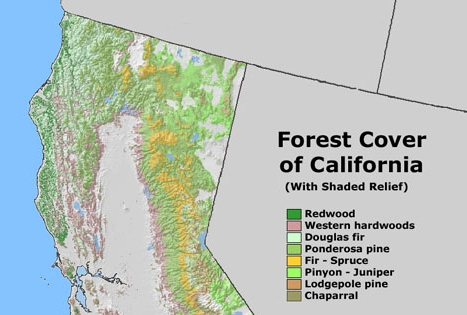 Forest Cover of California