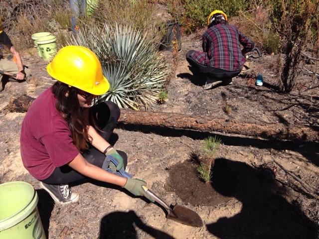 Scholars students planting trees