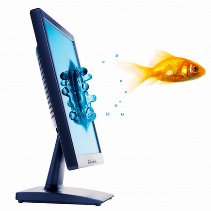 a goldfish flies out of a computer monitor