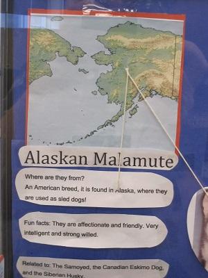 Alaskan Malamute--facts