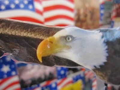 America--Bald Eagle-Closeup