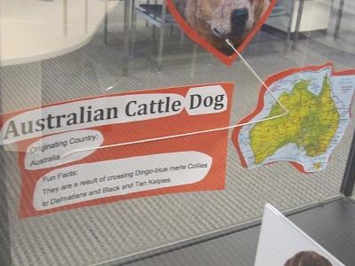Australian Cattle Dog--facts