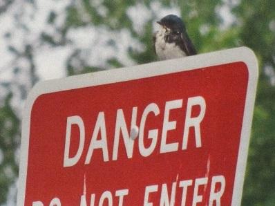 Bird on Danger Sign