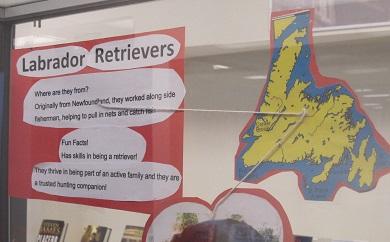 Labrador Retriever--facts
