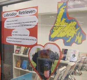 Labrador Retriever--photo and facts