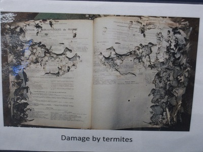Library Pests--Damage by Termites