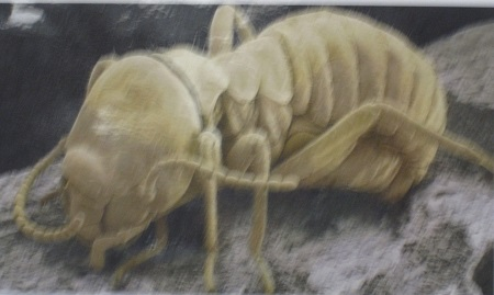 Library Pests--Termite