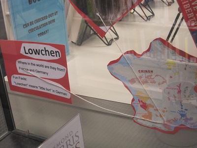 Lowchen--facts
