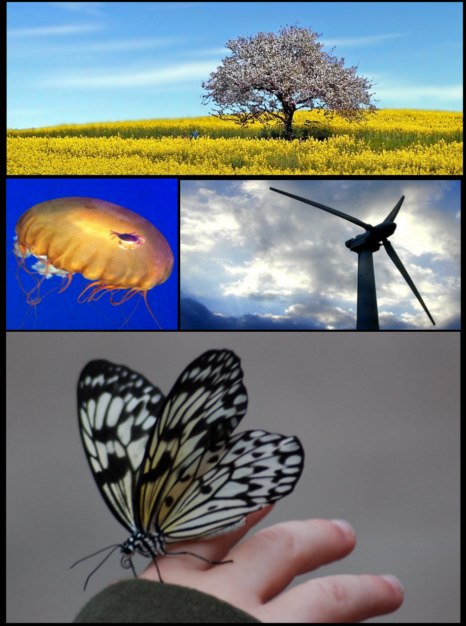 environmental science image collage