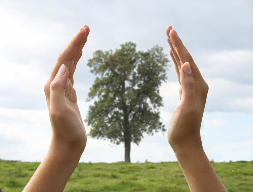 hands enclosing tree
