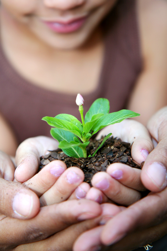 Hands holding a plant in dirt