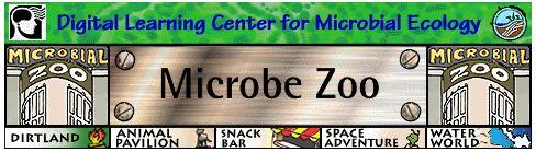 Microbe Zoo