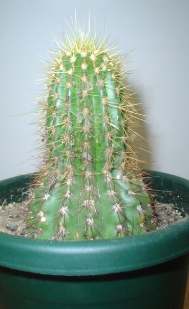 Barrel cactus plant image