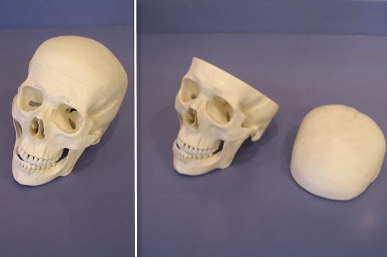 Skull Set - 1 piece
