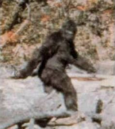 A still image from the famous Patterson–Gimlin Bigfoot film