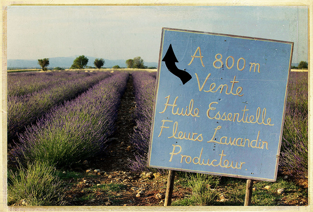 Provence Lavendar with directional sign
