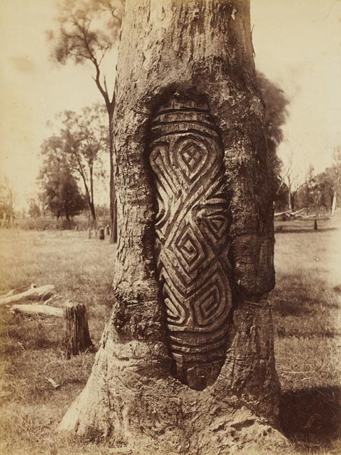 Aboriginal carved tree from the Dubbo district.