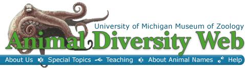 Animal Diversity Web