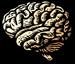 Psychology Image of a brain
