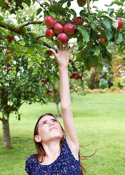 Image of a girl picking fruit