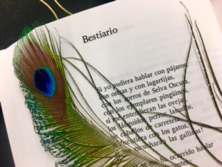 Peacock feather lying on top of a poem in Spanish