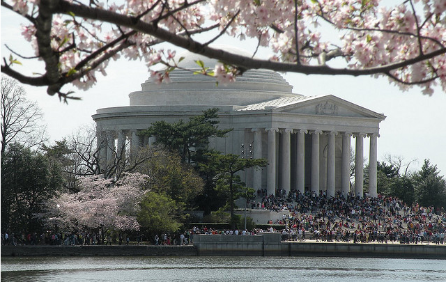 Jefferson Memorial during the cherry blossom festival