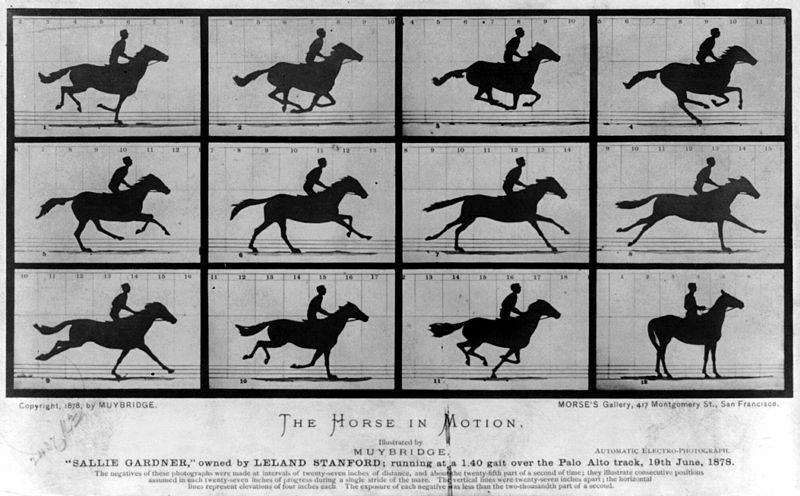 """The Horse In Motion"" Photos taken by Eadweard Muybridge"