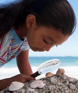 Examining a seashell image