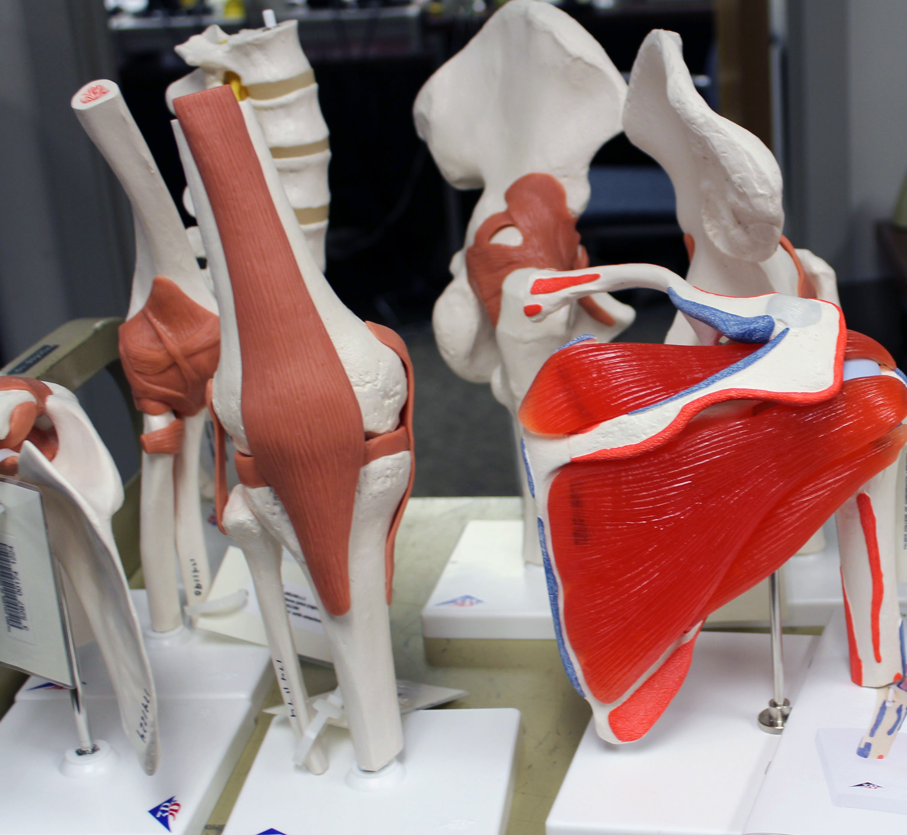 Flexible joints with ligament and muscle attachments